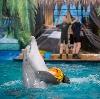 Дельфинарии, океанариумы в Егорьевске