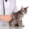 Ветеринарные клиники в Егорьевске
